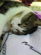 Enjoy Cat Life