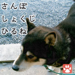 シバちゃん日記