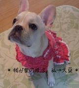 我が家の姫は、私→大豆