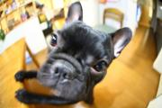 Photo de Tokidoki