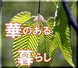 華のある暮らし -shinobi-