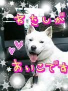 mamiっちの婚カツ記録と2匹の北海道犬のHappiness