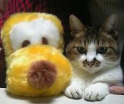 まねきウメ猫