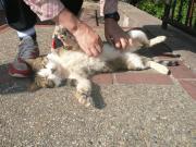 地域猫保護プロジェクト@神戸