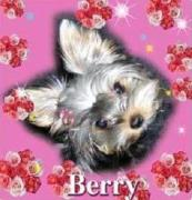 Berry Berry & Miew