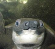 Webカノ誌 −ぼくの水族園日記−