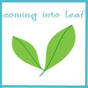 coming into leaf