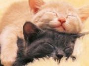 猫と犬との保護日誌:あなたと共に。。