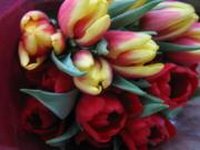 tulip's room