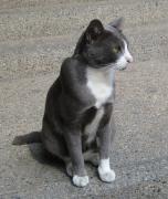 猫旅(チェンマイ・マイペンライ日記)