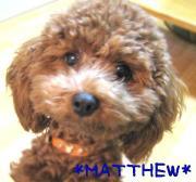 * MATTHEW's DAYS *