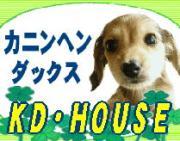 カニンヘンダックス専門ブリーダーKD・HOUSE