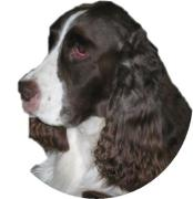 発達障害指導研修会 療育犬(セラピードッグ)研修会