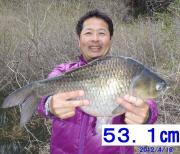 仙台1127(いいふな)のへら鮒釣り