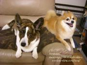 夫と妻と犬2匹