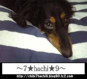 〜7☆hachi☆9〜