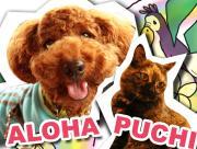 puuchiとAloha〜♪な生活