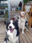 *Dog's  Garden*