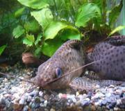 fish☆fish熱帯魚とお友達