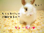 Reito成長日記
