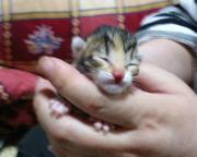 子猫育て奮戦記