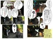 ラッキーファミリー猫探検隊ブログ