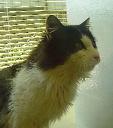 ワンちゃん猫ちゃんの「里親探し」をお手伝いをします