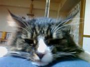 芸猫ビビのブログ