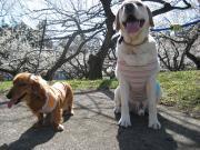 るりママと娘と犬の生活