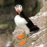 Bird Avenue -スコットランド・ 小さな庭の仲間たち-