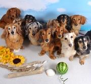 Love Love Dachs DogCafe&Bar La Sherry