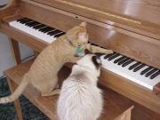 あるOLピアニストの呟き