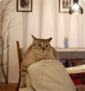 猫とインテリアと+