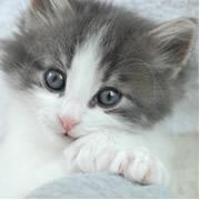 小倉森猫 * 猫日和