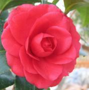 //夢の薔薇庭//-Angel's Garden-
