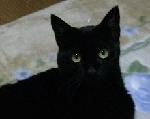 マグマダイバーを夢みる猫