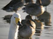 鳥とか鳥とか・・・鳥が大好き! 宮城の野鳥写真