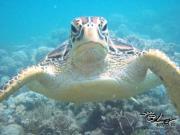 Cairns GBR diving Info