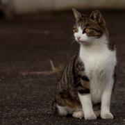 東京猫紀行