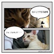 兄弟猫トシと総悟