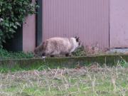 猫庭周辺観察日記