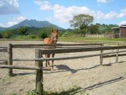 阿蘇の乗馬クラブBLUE GRASSの日記