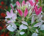 花とサカナの日々
