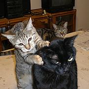 黒猫ぶんの子育て日記