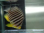海水魚とサンゴのお店 俺の海