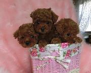 ☆マナ&ルミの可愛いワンちゃんたちの日常と子犬たち