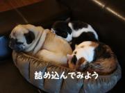 和菓子日記〜パグとねこの日常〜