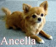 Ancellaさんのプロフィール