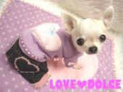 LOVE DOLCE NEWS