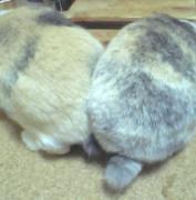 ヒトウサギ